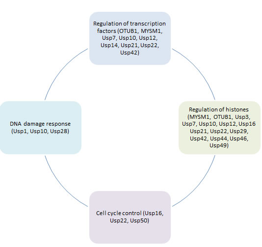 Role of deubiquitinating enzymes in different aspects of cancer epigenetic regulation.