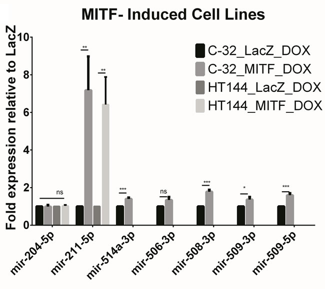 Figure shows the miRNA expression of the known lineage-specific miRNA, miR-211-5p along some other highly expressed miRNAs with known associations with melanoma.