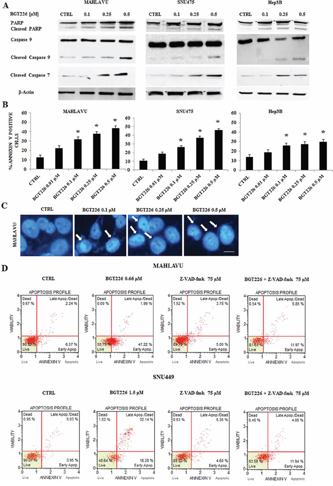 BGT226 induces apoptosis in HCC cell lines.