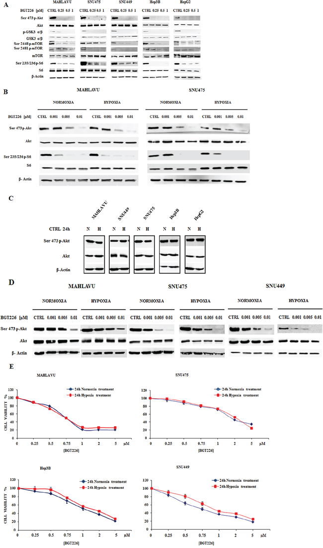 BGT226 modulates PI3K/Akt/mTOR pathway in HCC cells and is sensitive either in normoxia and hypoxia conditions.