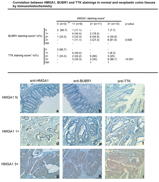 HMGA1 proteins expression correlates with BUBR1 and TTK expression in colorectal cancer samples.