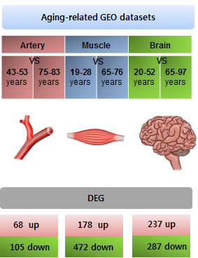 Collection of aging-related gene expression signatures from the artery, muscle, and brain.