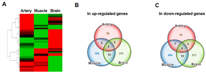 Comparison of aging-related gene expression between different tissues.