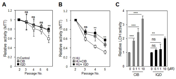 Testing changes in cell death and proliferation induced by the agents.
