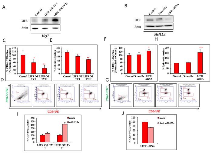 LIFR modulation mimics the effects of miR-125a.
