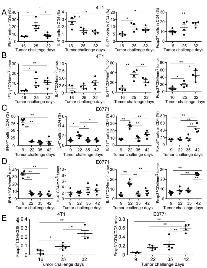 Dynamics of tumor-infiltrating CD4