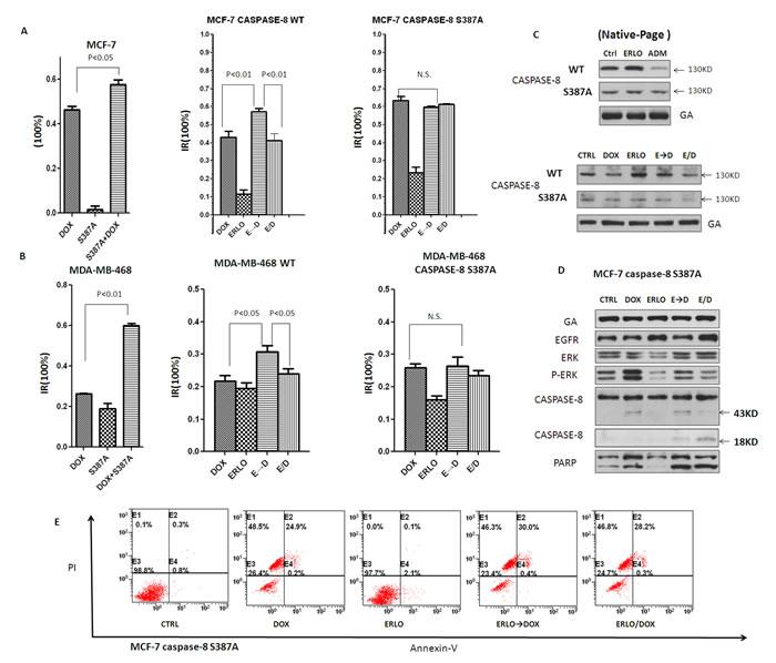 Erlotinib induces pro-caspase-8 homodimerization by attenuating the phosphorylation of pro-caspase-8 at S387 mediated by pERK 1/2.
