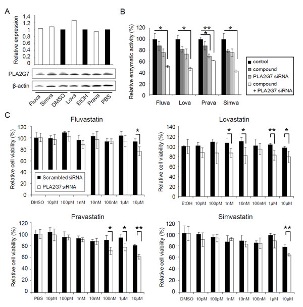 Statins decrease the enzymatic activity of PLA2G7 and act synergistically with