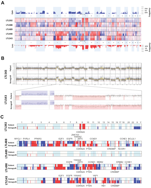 Array comparative genomic hybridisation (aCGH) of primary tumors and corresponding xenografts.