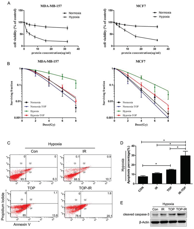 TOP inhibits tumor cell growth and enhances radiosensitivity under normoxic and hypoxic conditions in vitro.