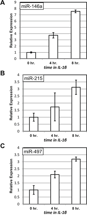 Induction of miRNA expression upon treatment with IL-1β.