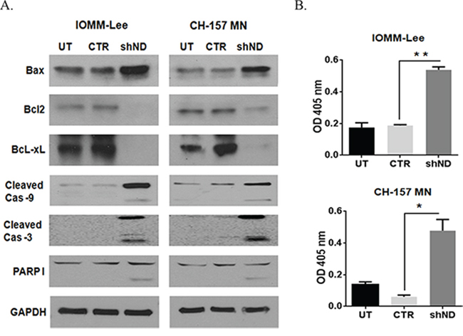 Silencing NDRG4 induces apoptosis through the mitochondrial apoptotic pathway.