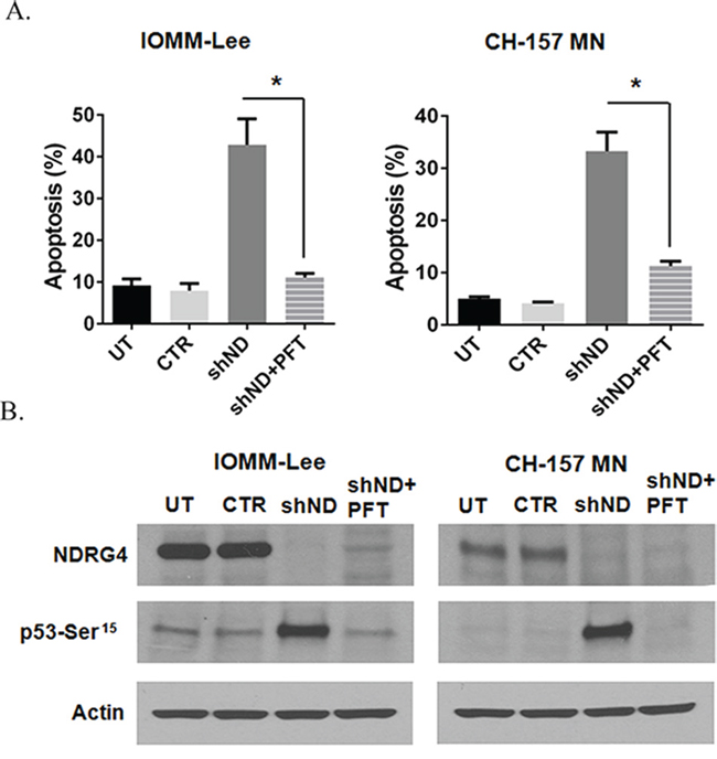 Inhibition of p53 abrogates targeted NDRG4 induced apoptosis.