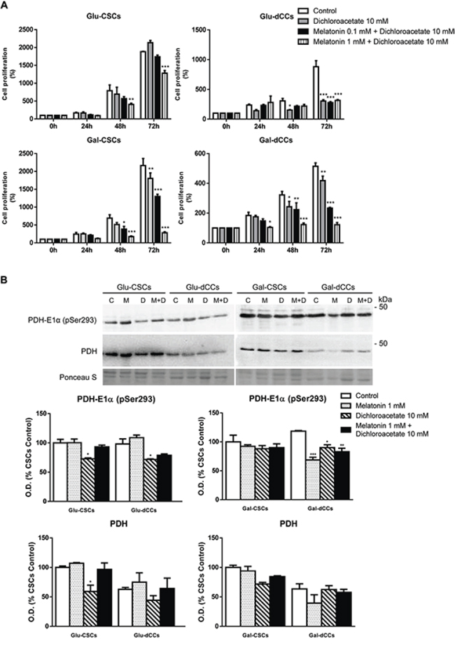 Effect of the combined treatment with melatonin and dichloroacetate (DCA) in P19 embryonal carcinoma stem (CSCs) and differentiated (dCCs) cells, grown in glucose (Glu) and galactose (Gal) media.