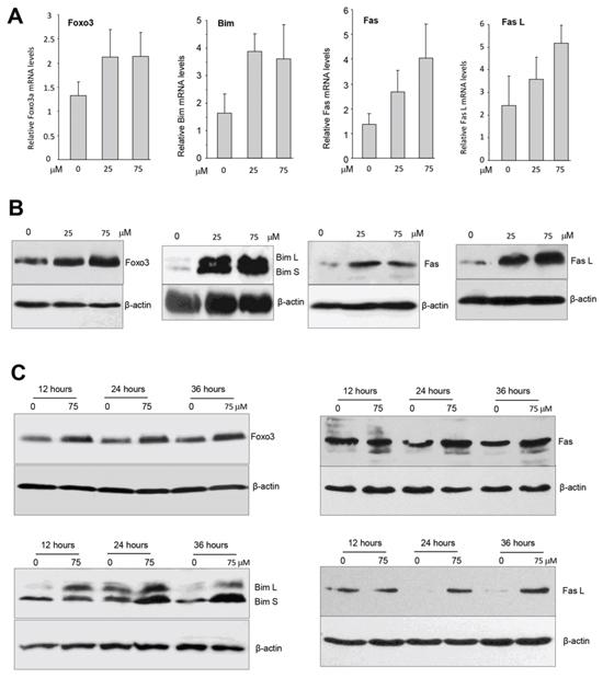 Ergosterol up-regulated multiple tumor suppressors.