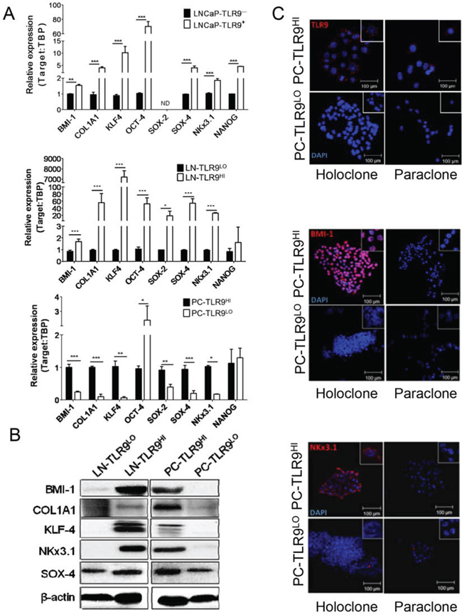 TLR9 orchestrates expression of prostate cancer stem cell-related genes.