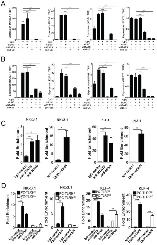NF-κB and STAT3 co-regulate expression of NKX3.1 and KLF-4 prostate cancer stem cell-related genes downstream from TLR9.