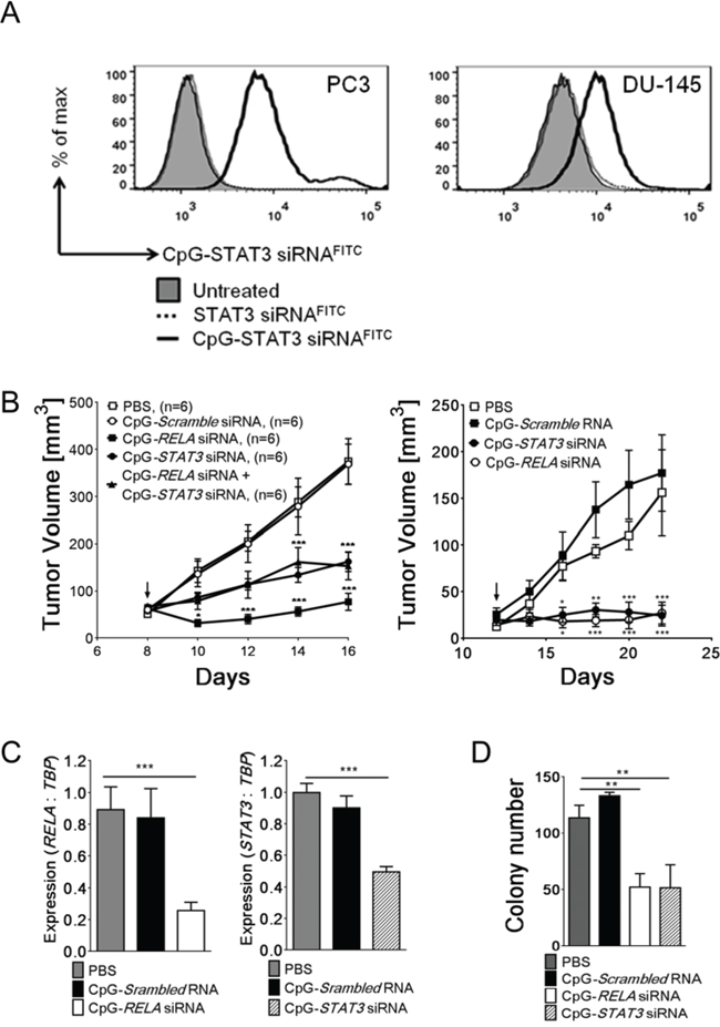TLR9-targeted silencing of RELA or STAT3 inhibits growth and clonogenic potential of prostate tumors.