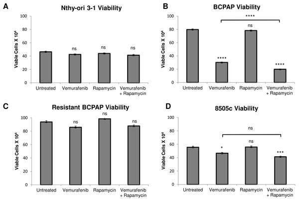 Effects of rapamycin and vemurafenib on cell viability.
