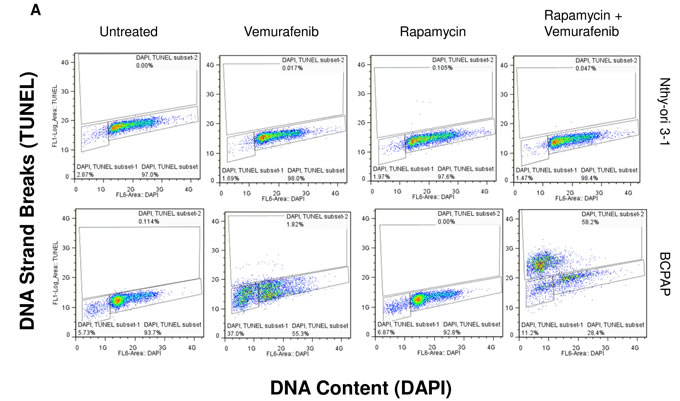 Apoptosis detected after rapamycin and vemurafenib treatment in BCPAP cells.