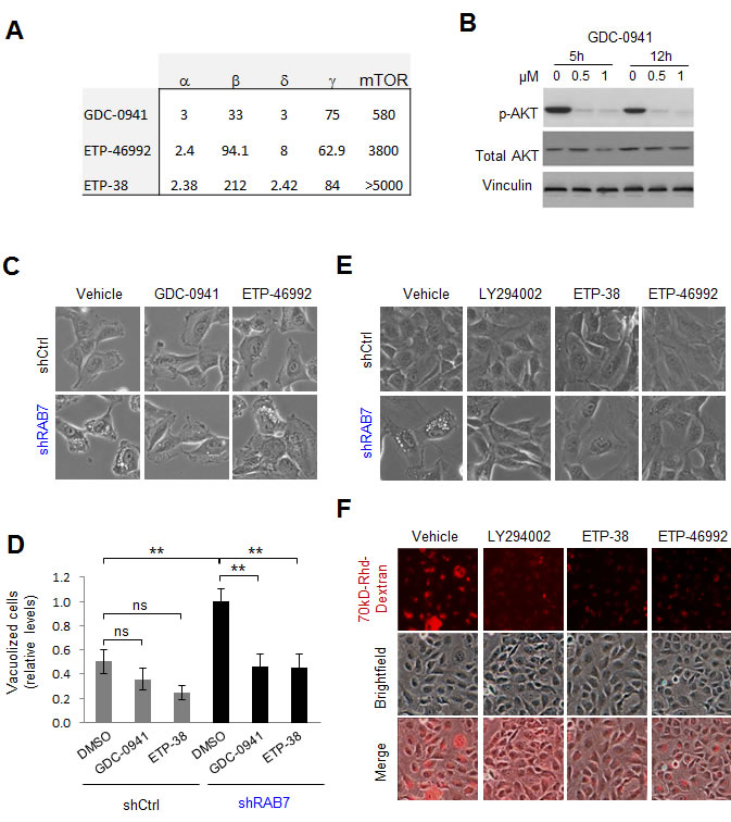 Class I PI3K signaling drives constitutive RAB7-regulated macropinocytosis in melanoma cells.