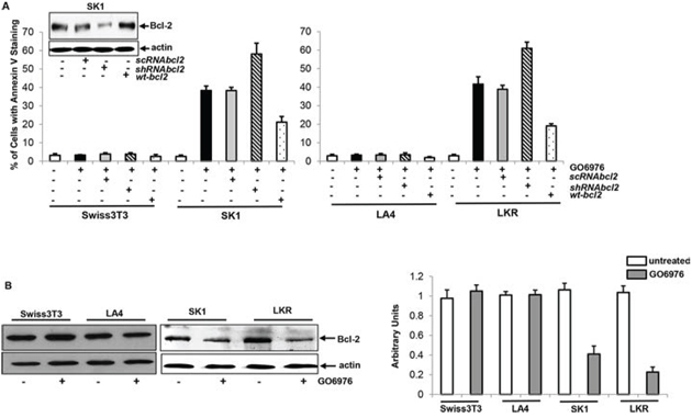 Effect of Bcl-2 on the onset of apoptosis induced by GO6976.