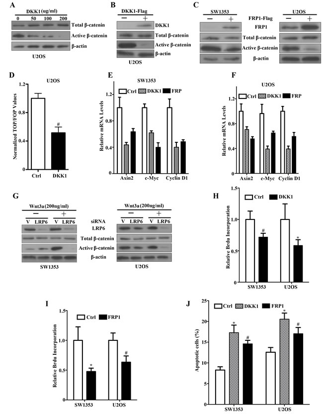An autocrine Wnt signaling loop by DKK1, FRP1 inhibition and siLRP6 in bone sarcoma cells.