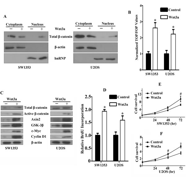 Functional effects of canonical Wnt/β-catenin signaling activation in bone sarcoma cells.