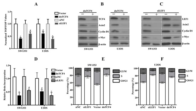 Disruption of activated Wnt signaling by dnTCF or siLEF1 in bone sarcoma cells induces inhibition of cell proliferation.