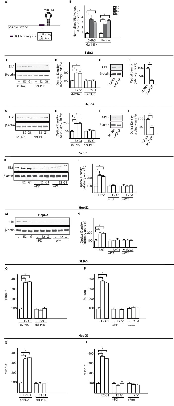 The transcription factor Elk1 is involved in the up-regulation of miR144 by E2 and G-1.
