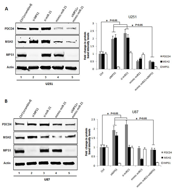 Genomic silencing of MPS1 enhances PDCD4 and MSH2 expression