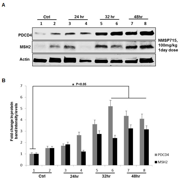 Pharmacologic MPS1 inhibition induces tumor suppressor PDCD4, MSH2 in GBM tumors