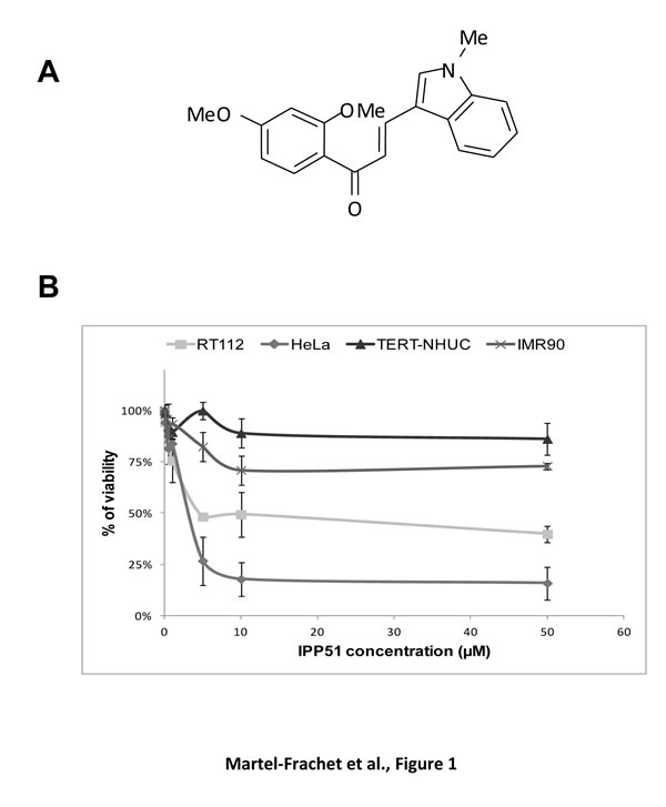 IPP51 selectively inhibits proliferation of human cancer cells versus normal non tumoral cells.