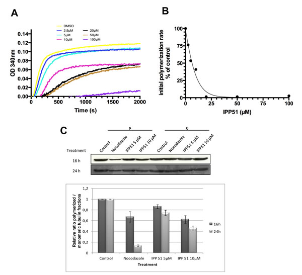 IPP51 inhibits tubulin polymerization