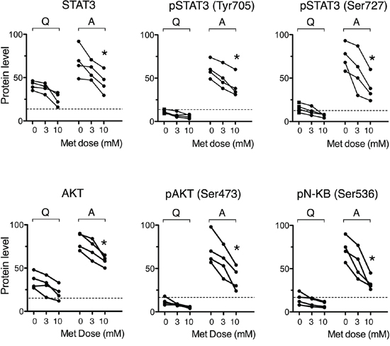 Metformin impairs stimulation-induced up-regulation of NF-kappaB, STAT3 and Akt activity.