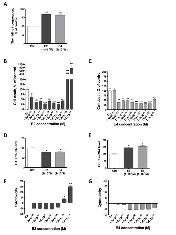E4 increases cell proliferation and reduces apoptosis of breast cancer cells.