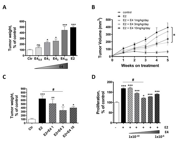 E4 moderately increases tumor growth
