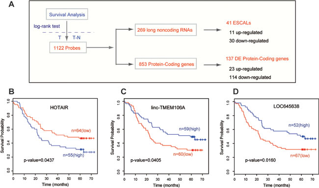 Long noncoding RNAs associated with survival time of ESCC patients.