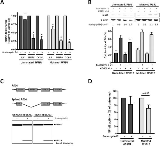NF-κB pathway inhibition by sudemycin.