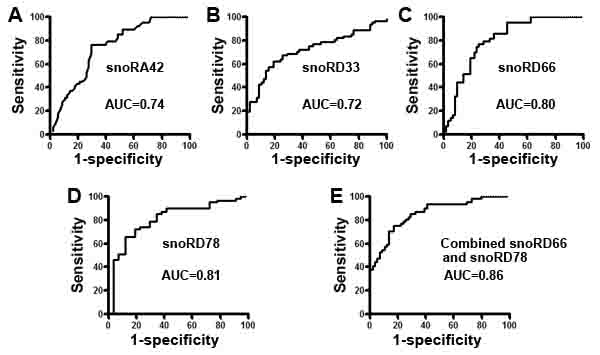 Receiver-operator characteristic (ROC) curve analysis of expression levels of the four snoRNAs in sputum of 59 patients diagnosed with NSCLC and 61 cancer-free smokers.