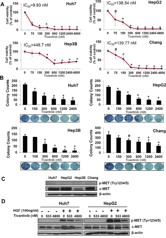 Tivantinib reduces cell viability and colony formation of HCC cells.