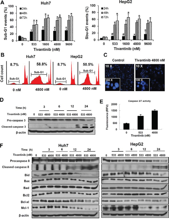 Tivantinib causes apoptosis by activating the mitochondrial apoptotic pathway.