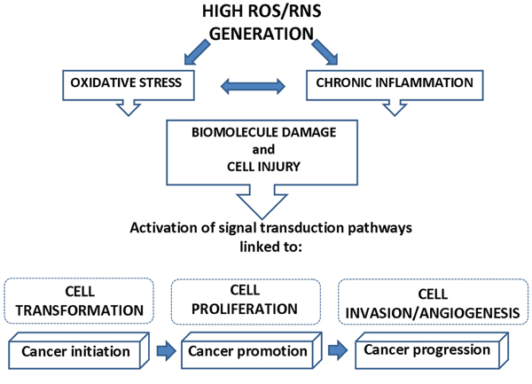 Link between ROS/RNS generation and cancer.