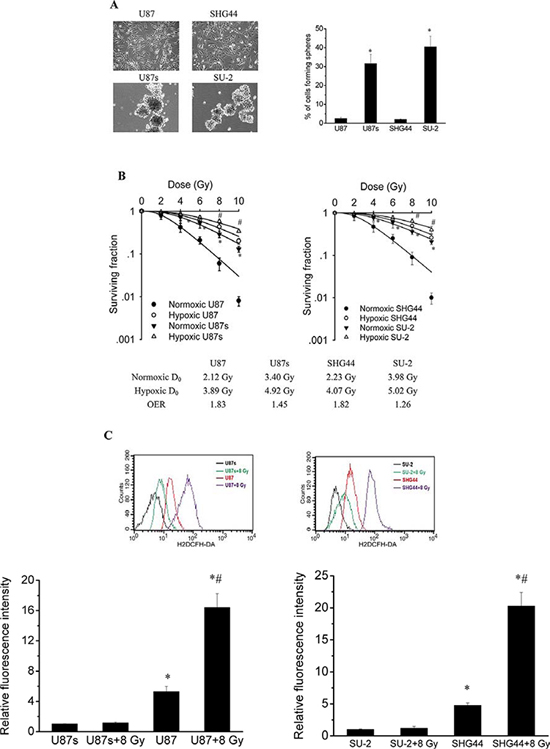 GSCs were more radioresistent and generated less ROS than non-GSCs glioma cells.