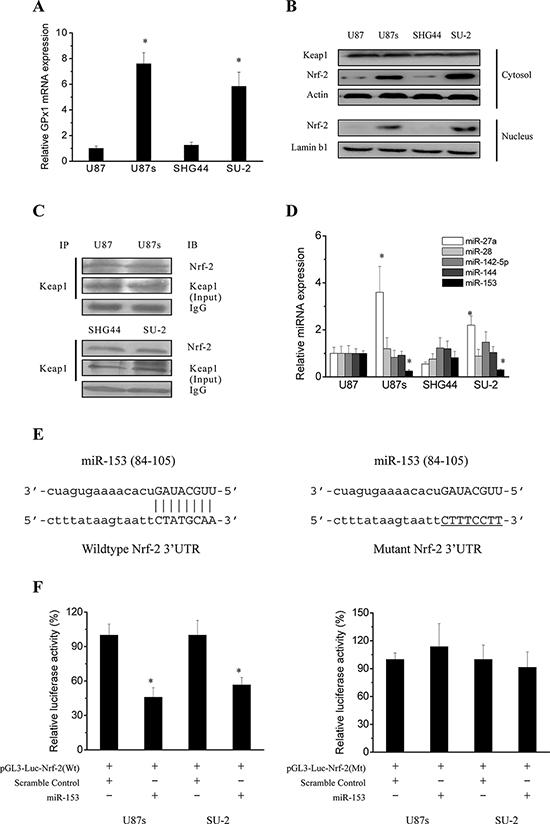 Regulation mechanisms of GPx1 expression.