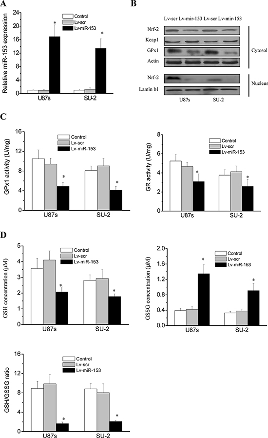 MiR-153 overexpression suppressed Nrf-2 expression and Redox enzymes activity in GSCs.