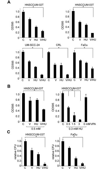 VPA and HU cooperate in HNSCC cells growth inhibition and loss of clonogenicity.
