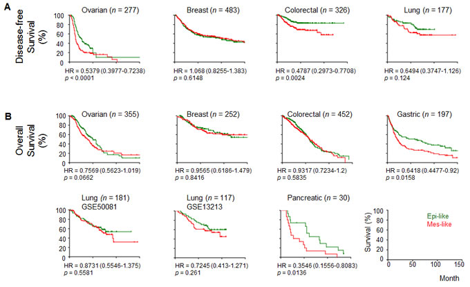 Correlation of the epithelial-mesenchymal transition (EMT) status with survival in cancers.