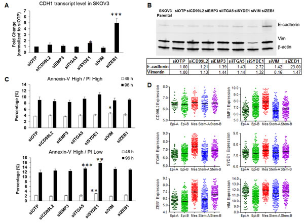 Effects of siRNA against the six mesenchymal signature genes on CDH1 expression, E-cadherin protein expression, and anoikis resistance.