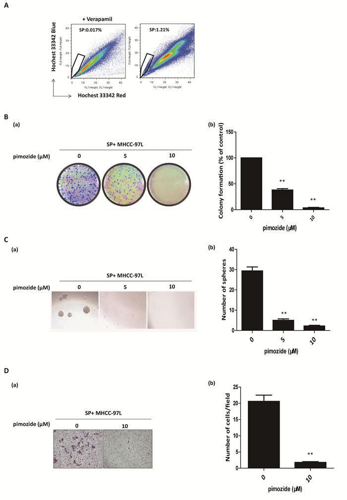 Pimozide inhibits the self-renewal and migration capacities of SP HCC cells.